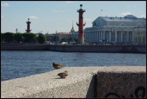 Чижики. Санкт-Петербург август 2011