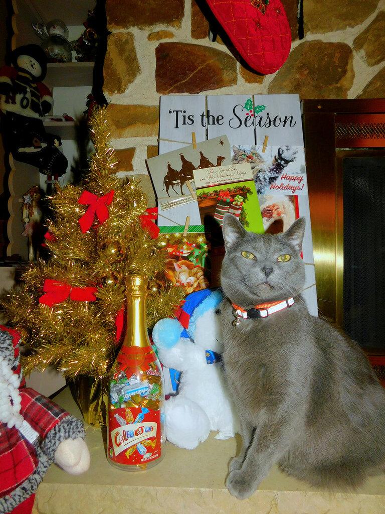 Christmas with Titan&Elvis