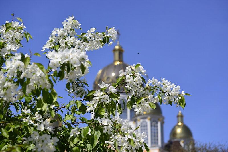 Цветы, пчёлы и купола...