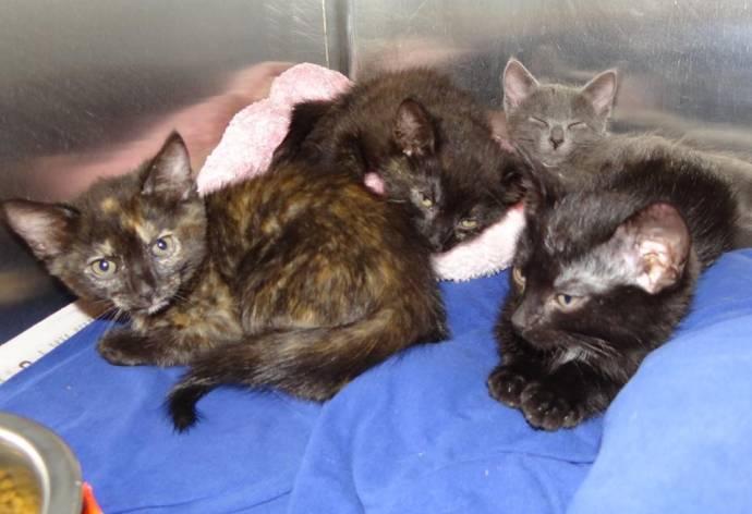 В Курске спасли выброшенных в лесу 30 котят