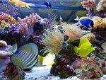 morskie_rubki_dlya_akvariumov.jpg