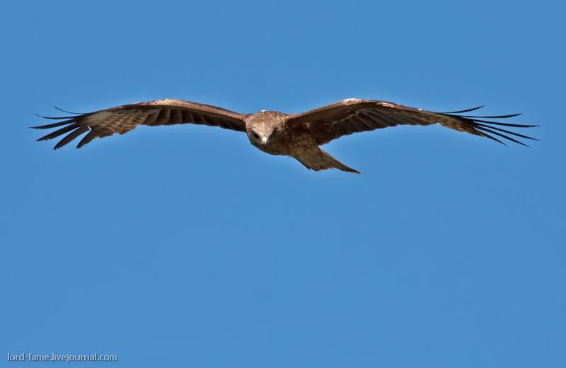 Птицы Восточного Казахстана