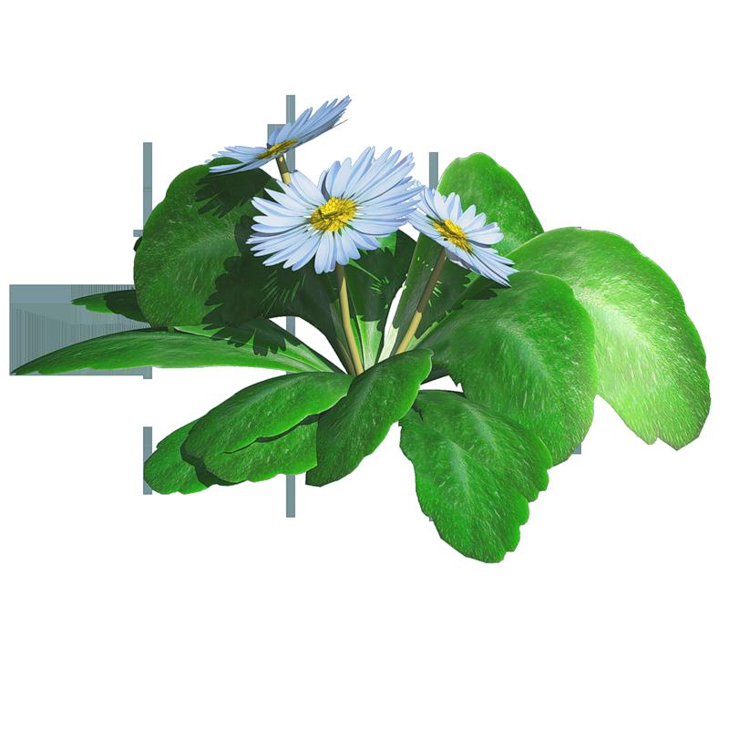 Цветы png обсуждение на liveinternet