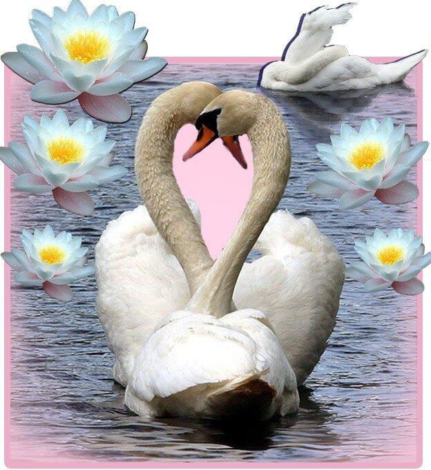 Два Лебедя Прекрасных
