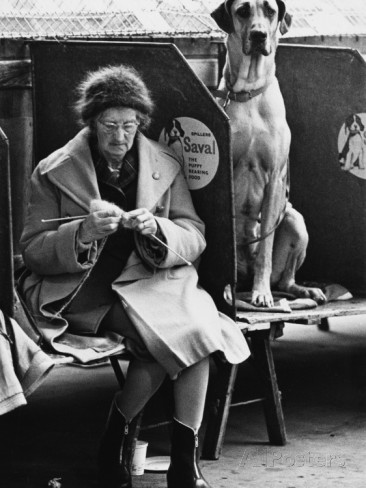Manchester Dog Show 1966