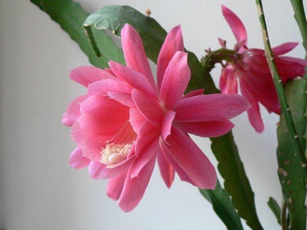 время цветов