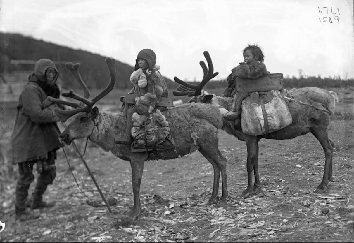 Тунгус с детьми на оленях, 1901