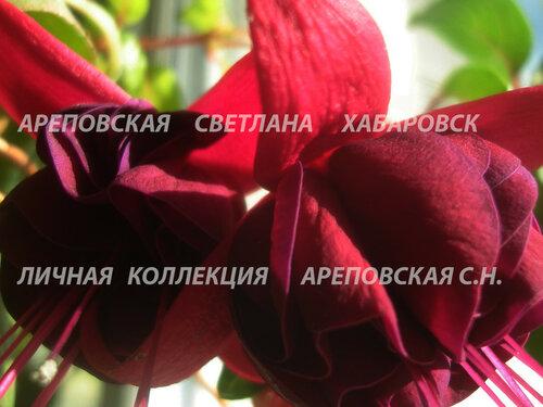 НОВИНКИ ФУКСИЙ. - Страница 5 0_160836_a496d00f_L