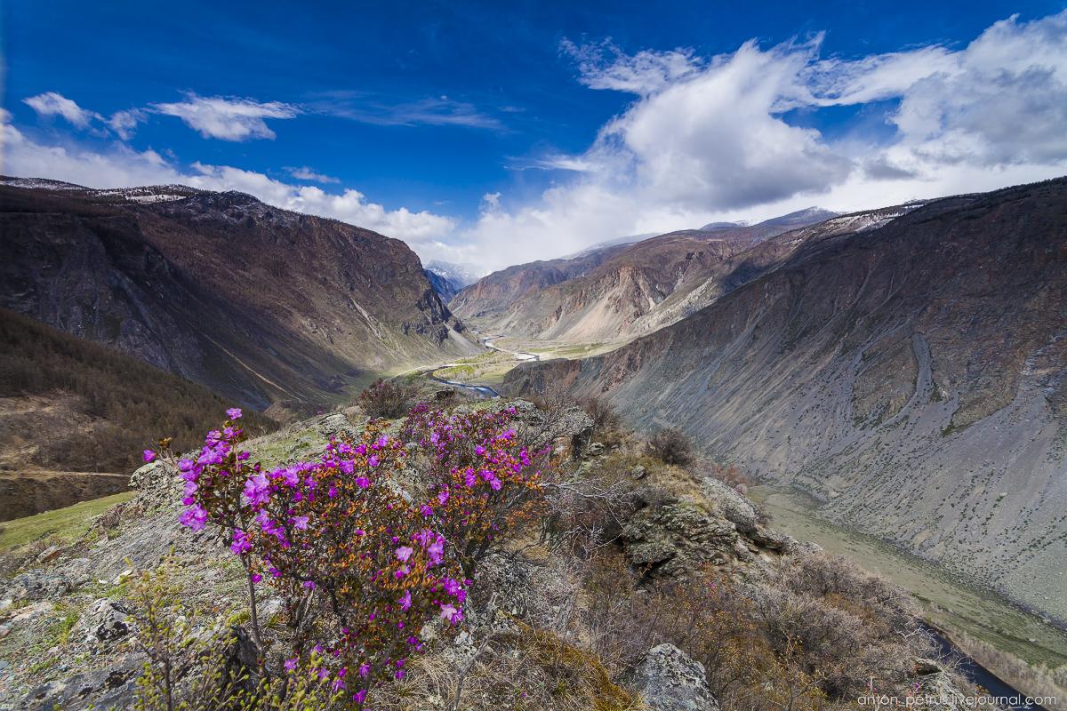 Весенний Алтай
