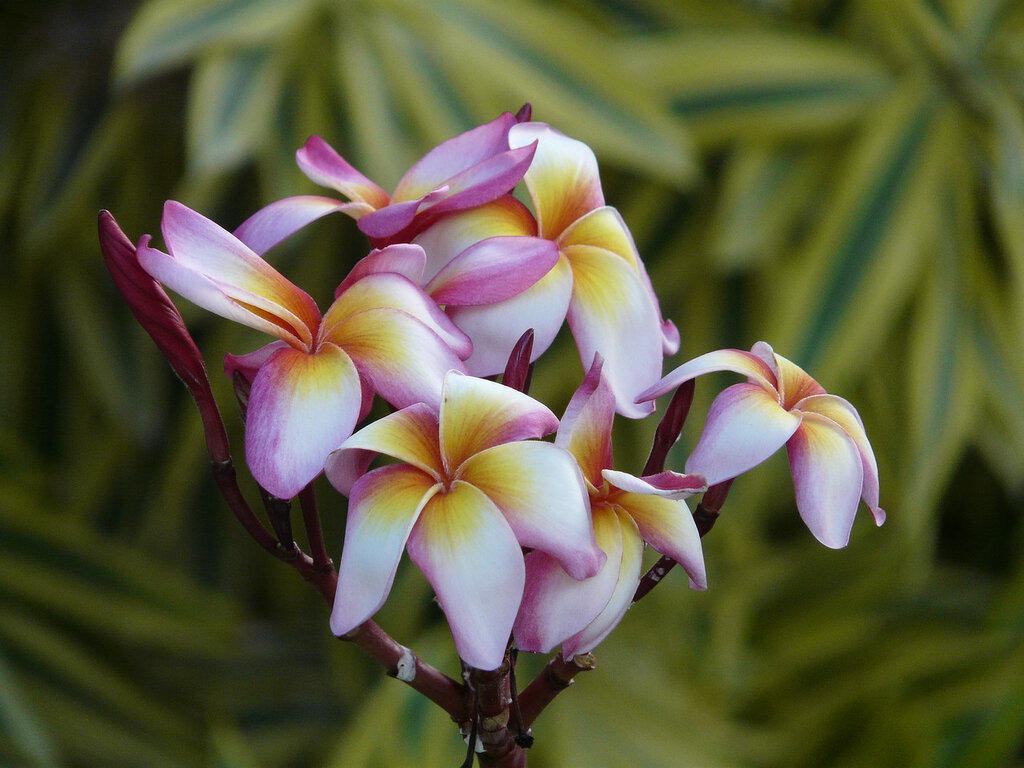 экзотические цветы картинки с названиями