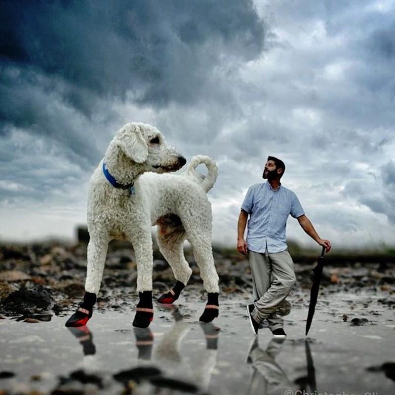 Для прогулок нет плохой погоды Кажется, дождь приближается…