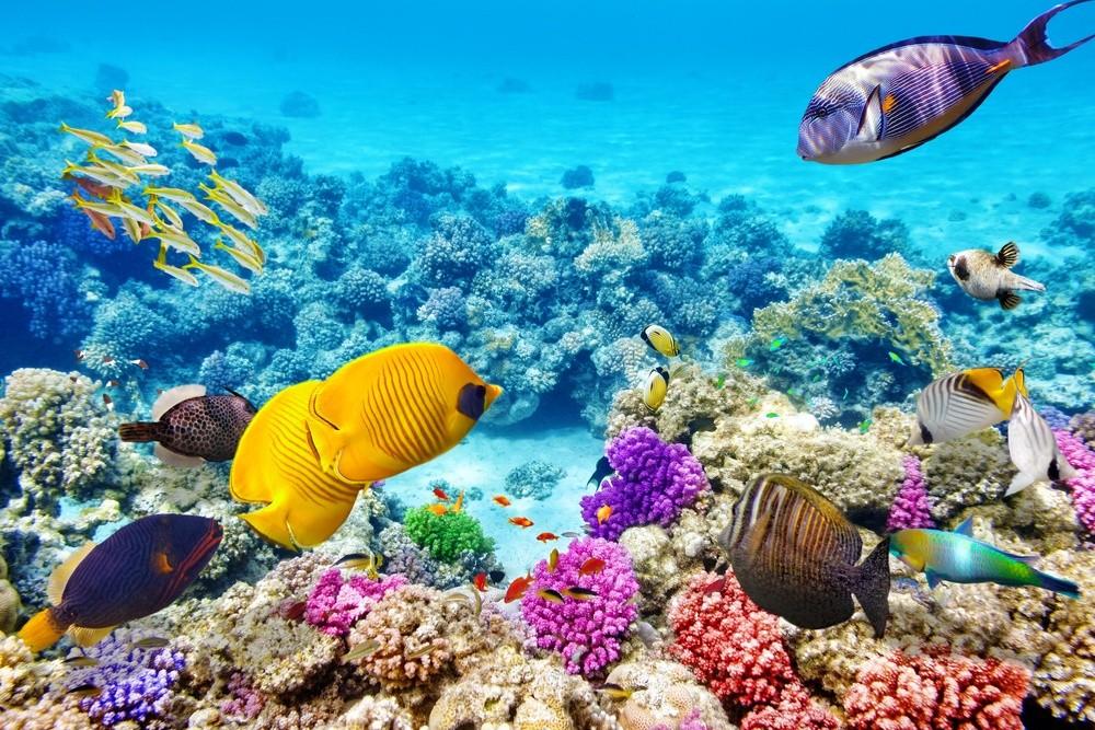 Большой Барьерный риф Повышение кислотности воды, большой поток туристов, потепление — все эти факто