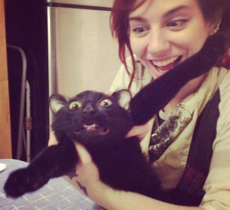 Коты, которые категорически не хотя фотографироваться и всем своим видом показывают это