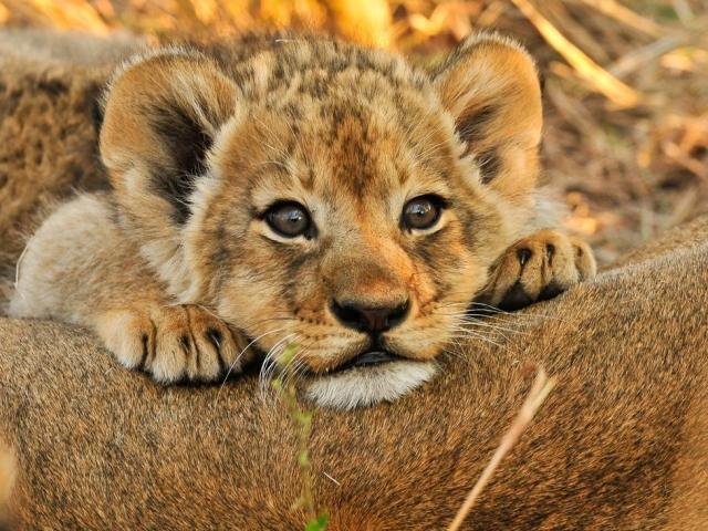 ВПерми определили победителя аукциона настроительство зоопарка