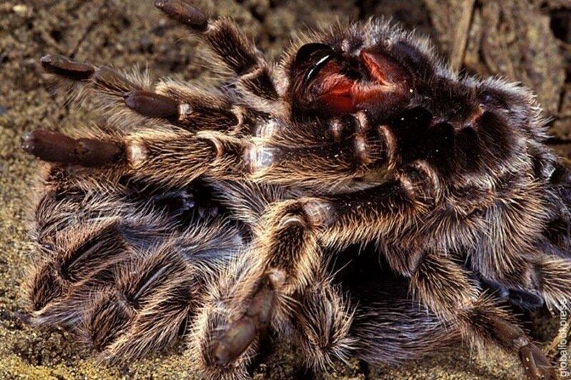 Гербарий уродов. Конкурс самых страшных животных планеты