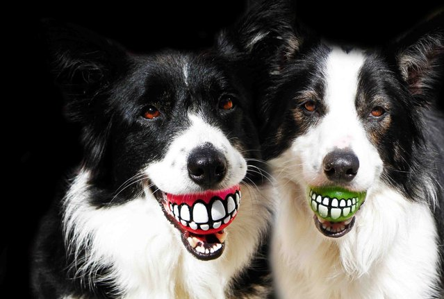 Rogz Grinz Ball Dog Toy