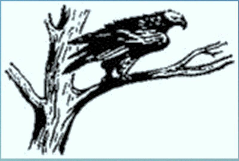 Иллюстрация к книге В.К.Арсеньева Дерсу Узала (7).jpg