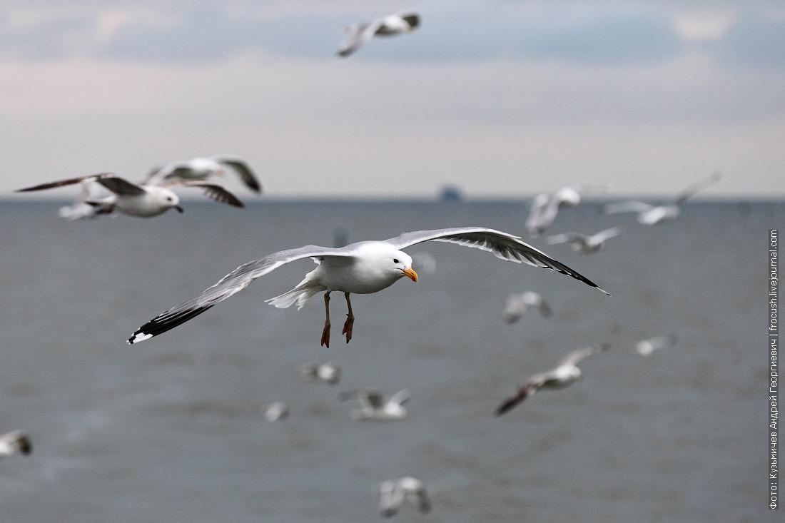 чайки на Азовском море