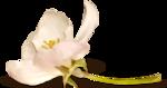 NLD Flower 2 sh bis.png