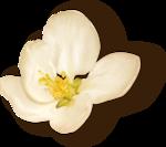 NLD Flower sh.png