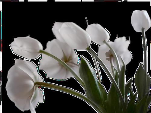 Цветы PNG