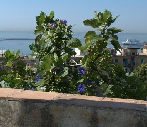 Minerva garden salerno
