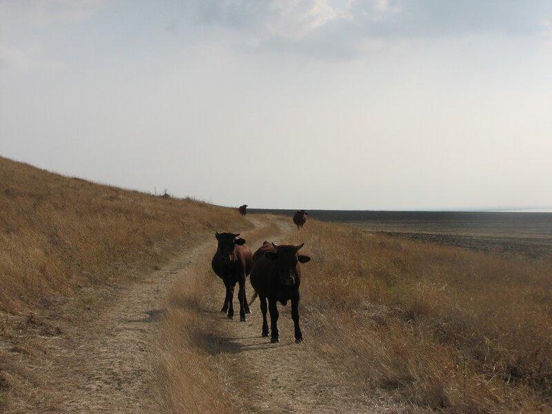 Крым или страна Мальборо 0_7da1e_facea1b9_XL
