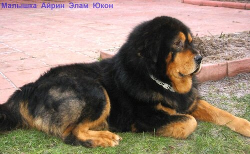 http://img-fotki.yandex.ru/get/5213/6307740.3/0_75323_d3da1151_L.jpg