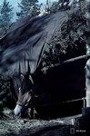 1941-09-26 Лошади покрыты защитным kuopassaan. / kuopassaan защиты лошади. Примечание: Vrikuvien Брошюра информации. Изображение двух разных экземпляров доклада, одна из которых, в то время 26.9.1941, а второй в октябре 1941 года. Место: Алакуртти (Salla)