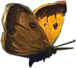 ldavi-paintersfaeries-butterfly2.png