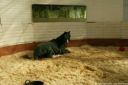 grey Я выбираю лошадей по душе и сердцу, а не по разуму