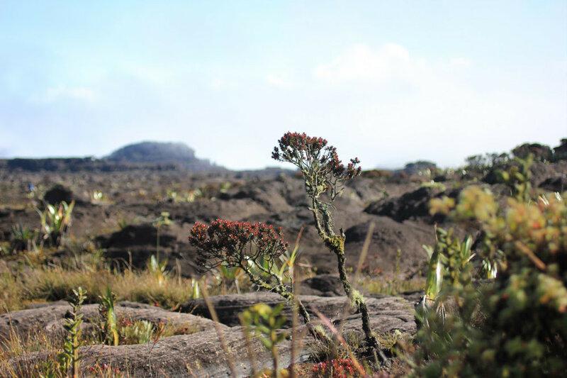 Фантастические виды на горе Рорайма в Южной Америке 0 14602c 1987b1a4 XL