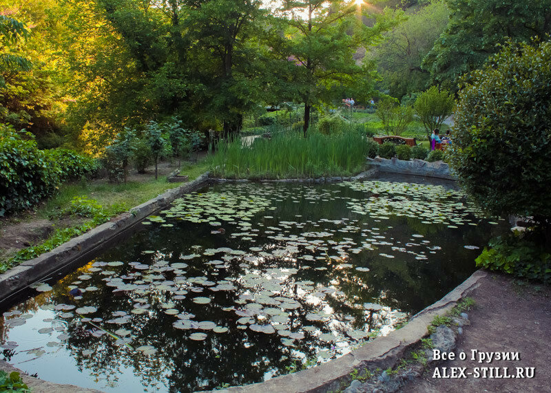В Ботаническому саду есть скамейки, где можно отдохнкуть