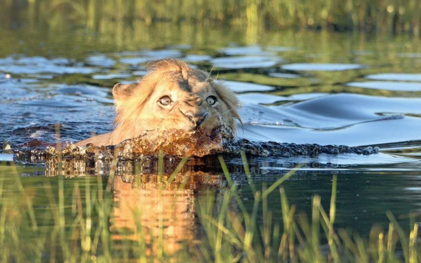 3. Зубастый крокодил. (Фото Ralph Paprzycki):