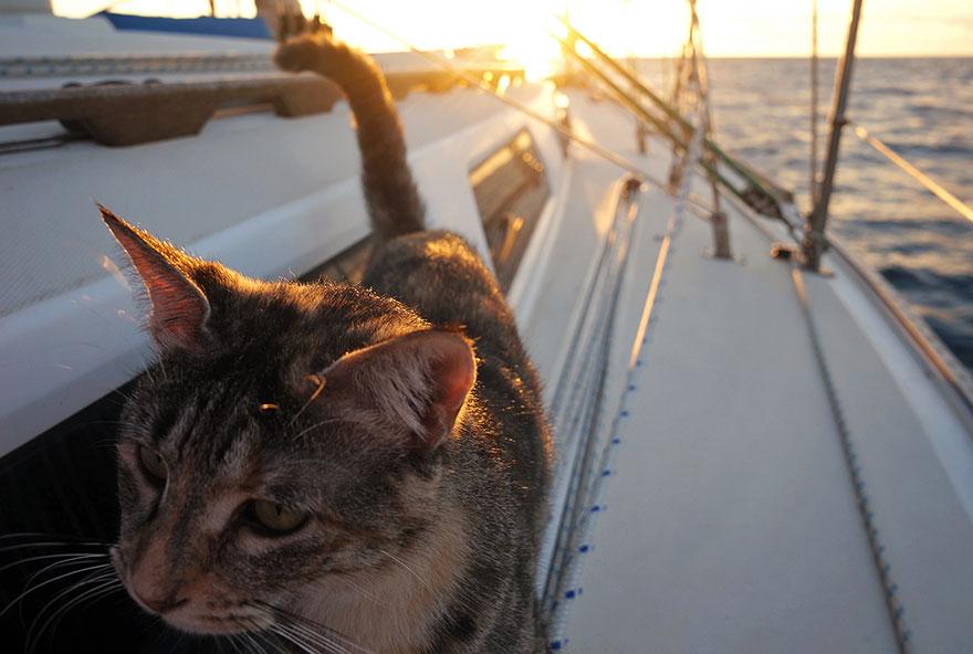 «Она проплыла вокруг яхты и залезла назад по лестнице».