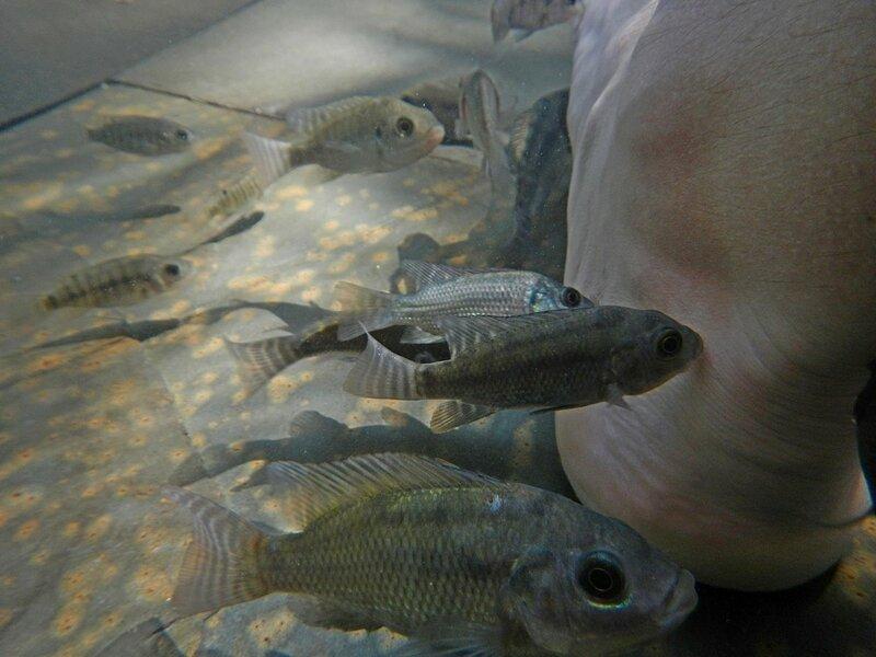 Рыбки обгладывают ороговевшую кожу ног - Термальные источники Наньтянь