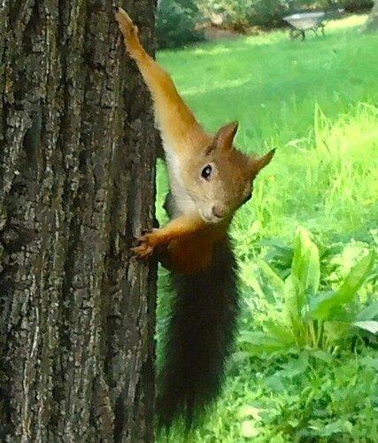 Орешки есть? Семечки не беру!