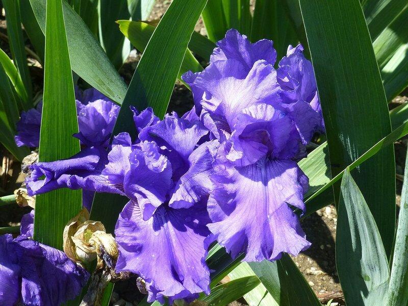 Цветы в Никитском ботаническом саду.