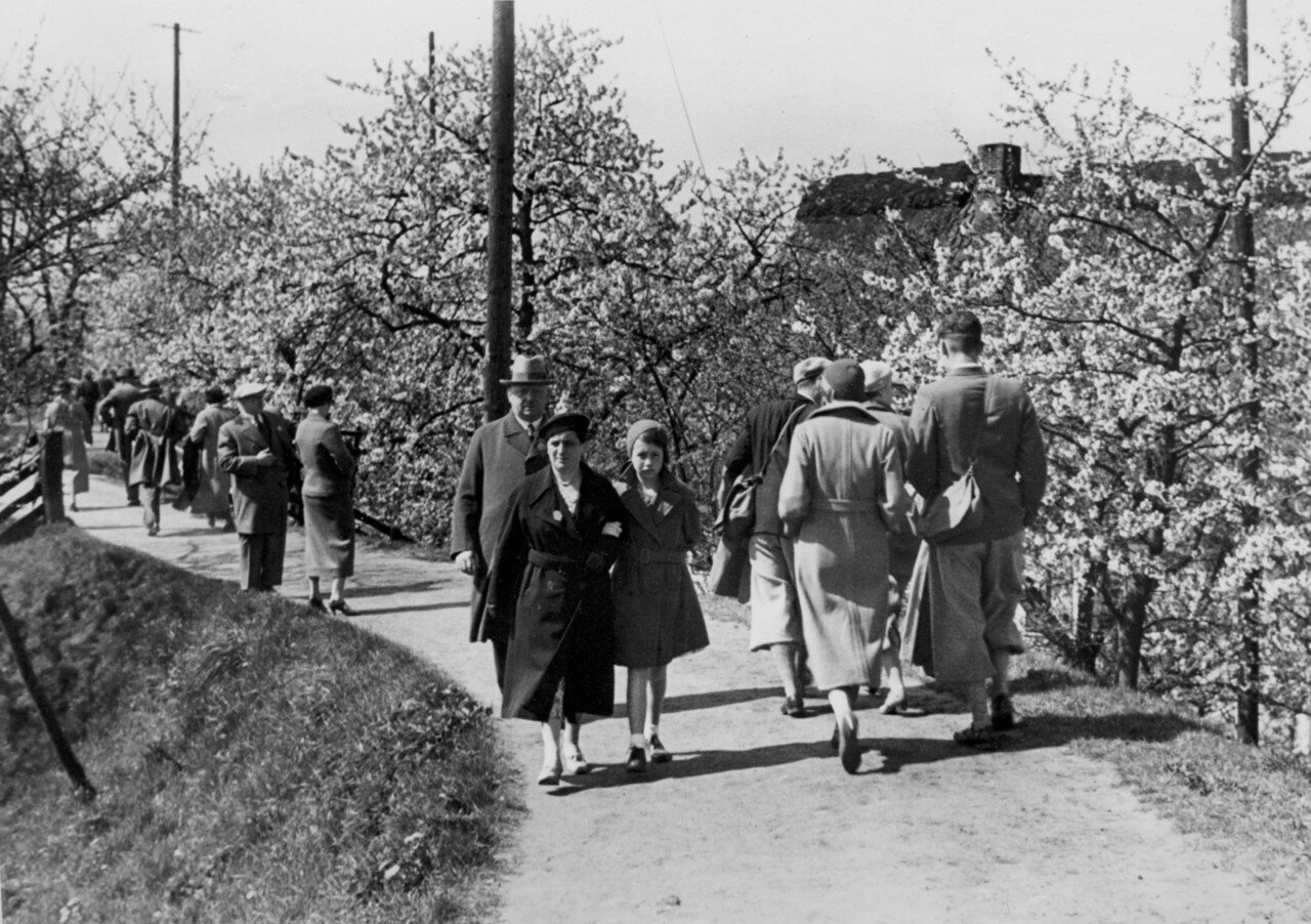 Гамбург. Люди гуляют среди цветущих деревьев
