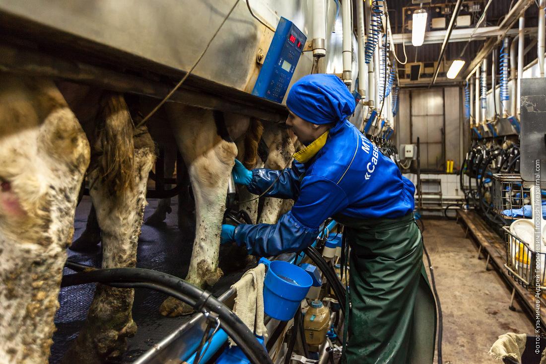 как делают молоко фотографии