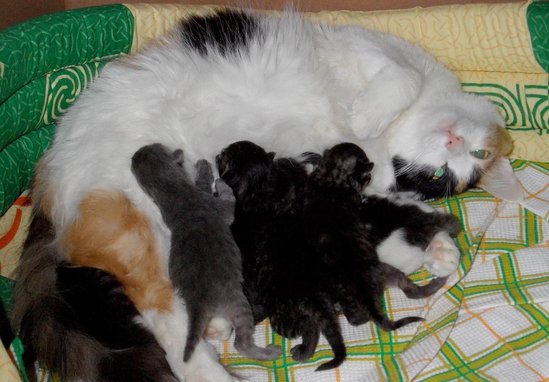 Первая неделя жизни котят