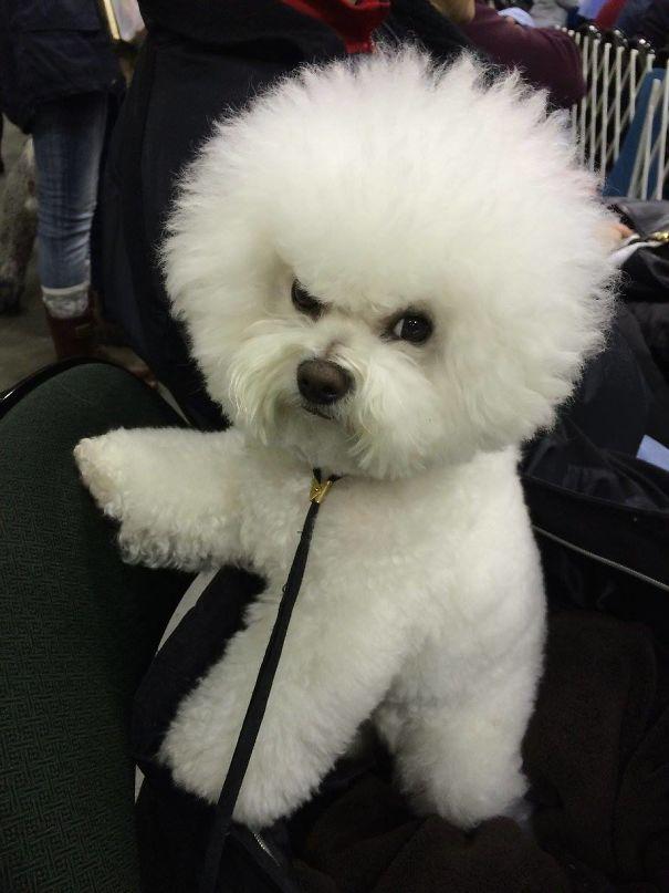 Знакомьтесь, Миа — сварливый щенок.
