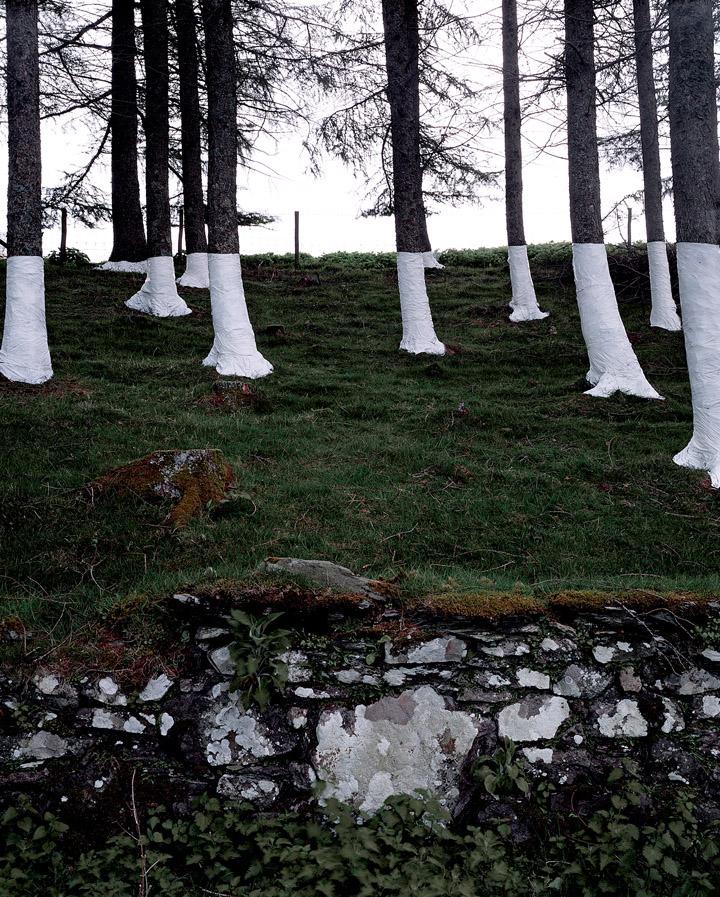 Зандер Олсен, деревья, линии