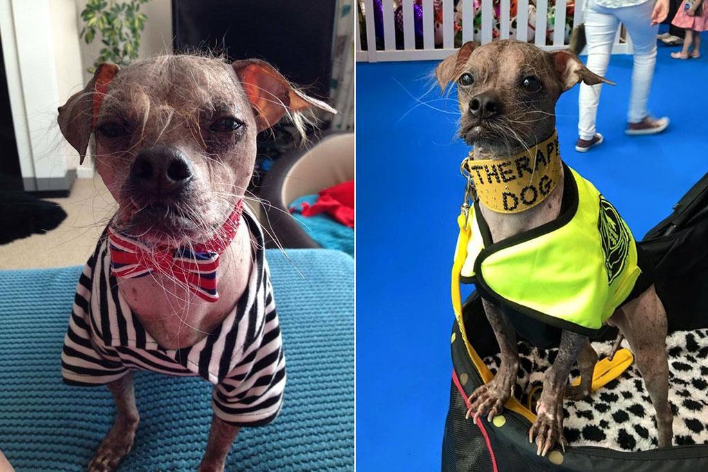 Магли стал собакой-терапевтом в 2010 году. Когда псу было всего три дня, первый хозяин отдал щенка в