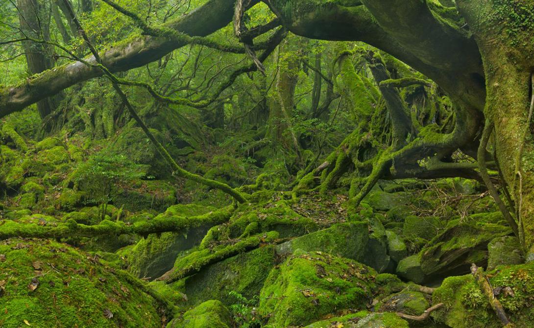 Остров Якусима Япония Остров является объектом Всемирного наследия ЮНЕСКО, а вот туристы открыли его