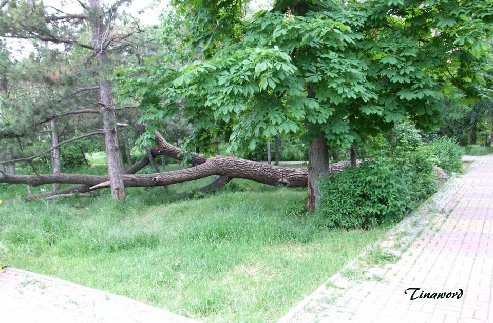 дерево-7.jpg