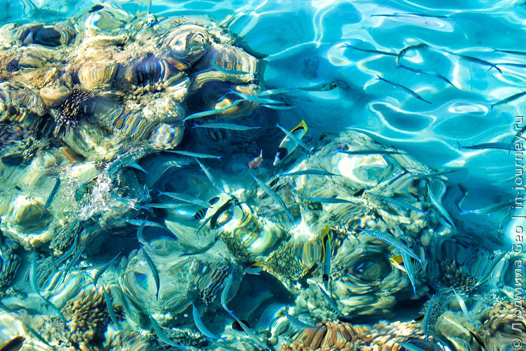 Красное море подводный мир
