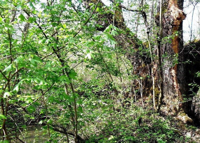 Апрель, в походе, путь к водопадам, окрестности Горячего Ключа (4).JPG