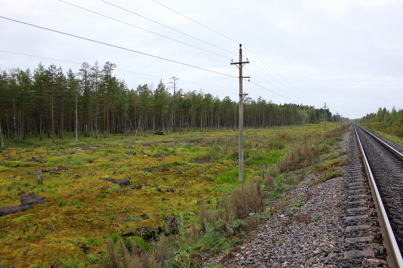 Болота вдоль путей Рижского направления, перегон Подсосенка - Земцы, вид на Великие луки