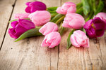 Tulips_Closeup_Wood_planks_517659_1280x853.jpg
